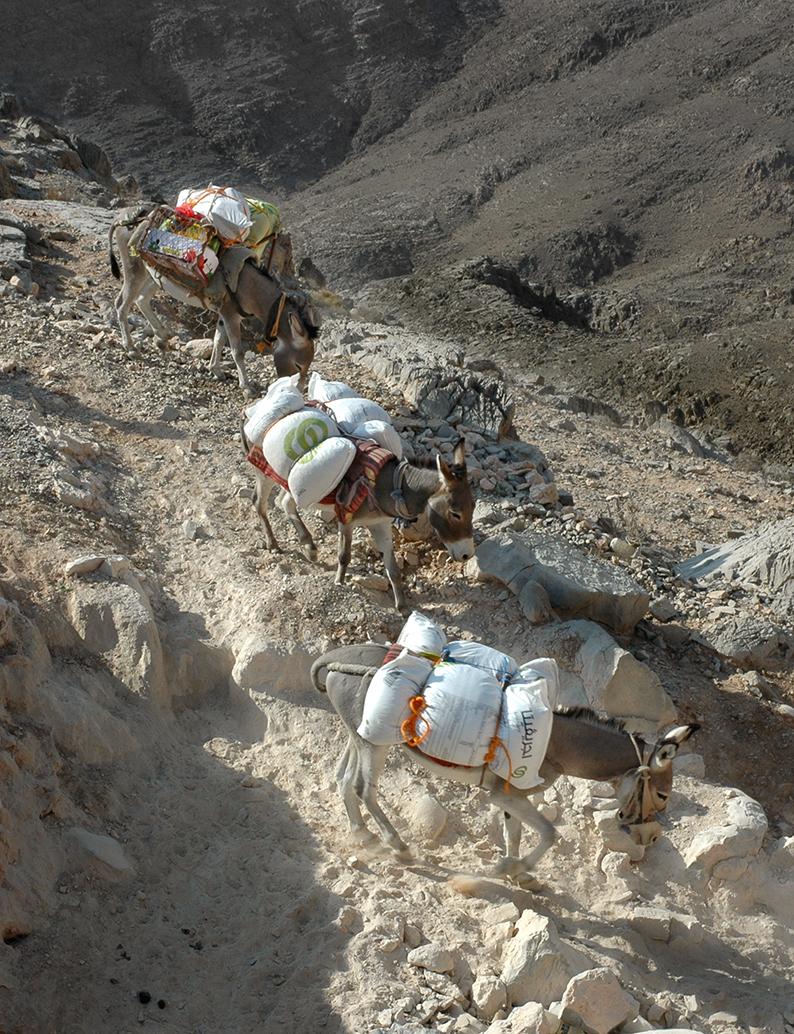 donkeys Ras Al Khaimah