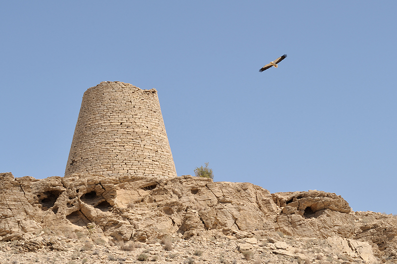 Oman trail beehive tombs egyptian vulture Jabl Bani Jabir
