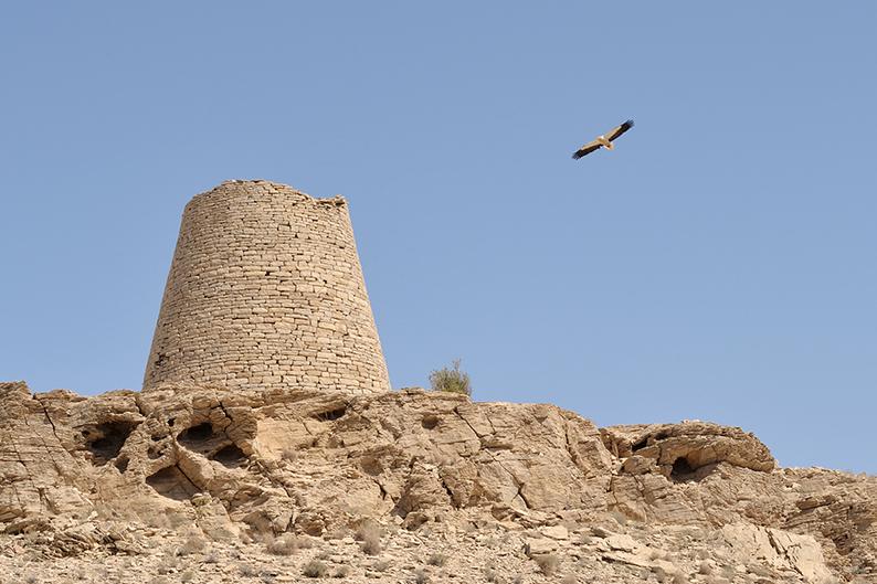 Oman trail beehive tombs egyptian vulture Jabl Bani Jabir