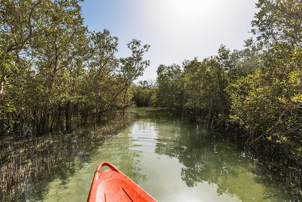 Umm al quwain mangroves