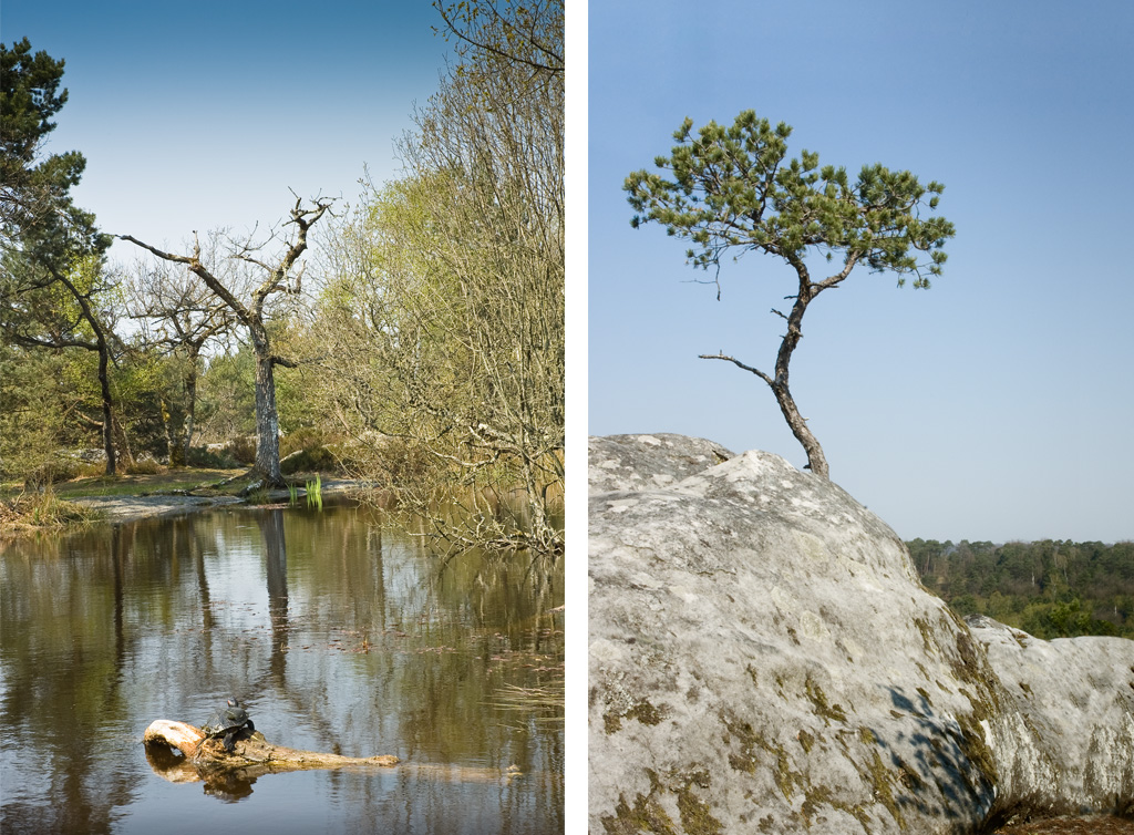 fontainebleau forest
