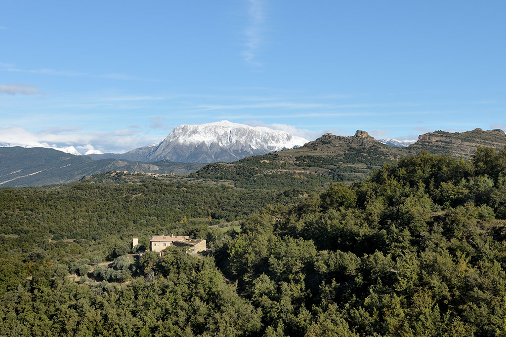 Aragon forest